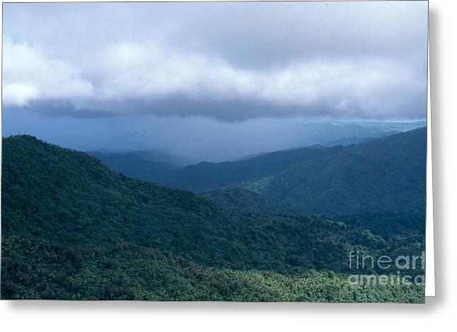 El Yunque Greeting Cards - Rain In El Yunque Greeting Card by John Kaprielian