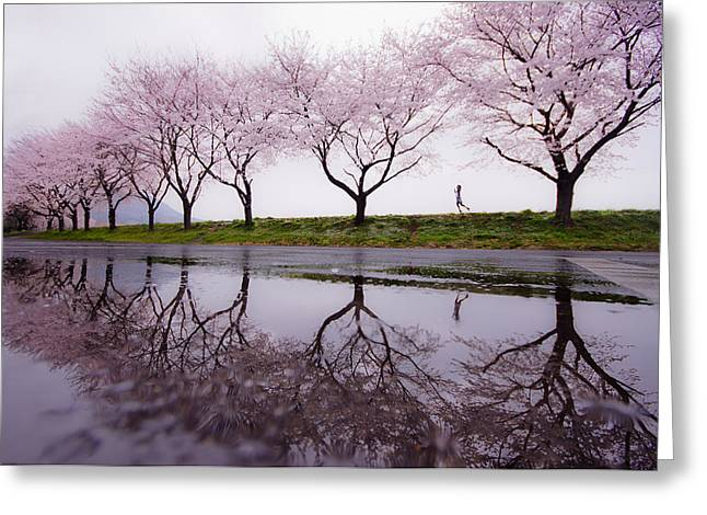 Cherry Greeting Cards - Rain Of Spring Greeting Card by Kouji Tomihisa