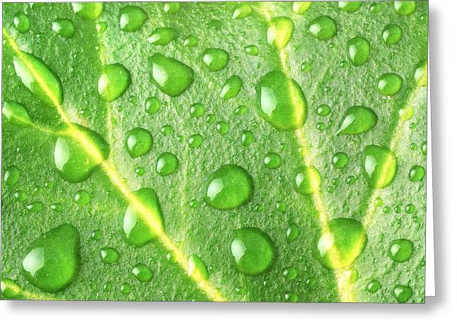 Green Leafs Greeting Cards - Rain On A Leaf Greeting Card by Jim Hughes