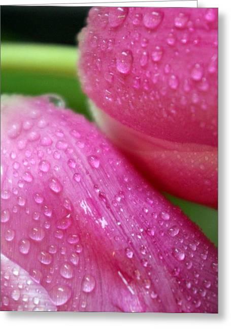 Rain On Me Greeting Card by Linda Mishler