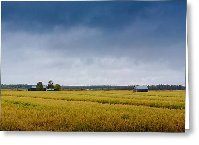 Field. Cloud Greeting Cards - Rain On The Fields Greeting Card by Jukka Heinovirta