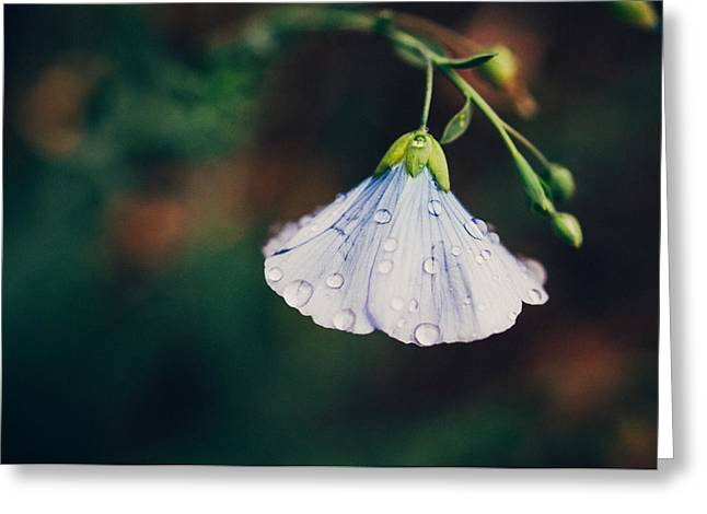 Garden Flowers Photographs Greeting Cards - Rain Tickled Greeting Card by Tracy  Jade