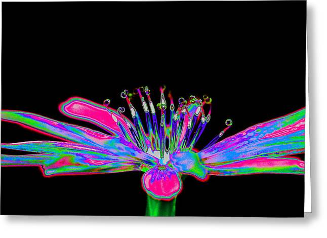 Wow Greeting Cards - Rainbow chicory Greeting Card by Richard Patmore