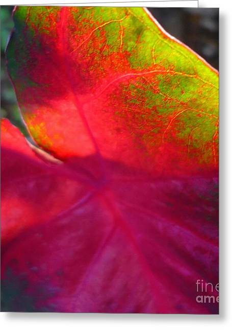 Rainbow Coleus 2 Greeting Card by Jeff Breiman