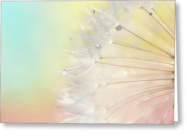 Macro Photography Greeting Cards - Rainbow Connection II Greeting Card by Amy Tyler