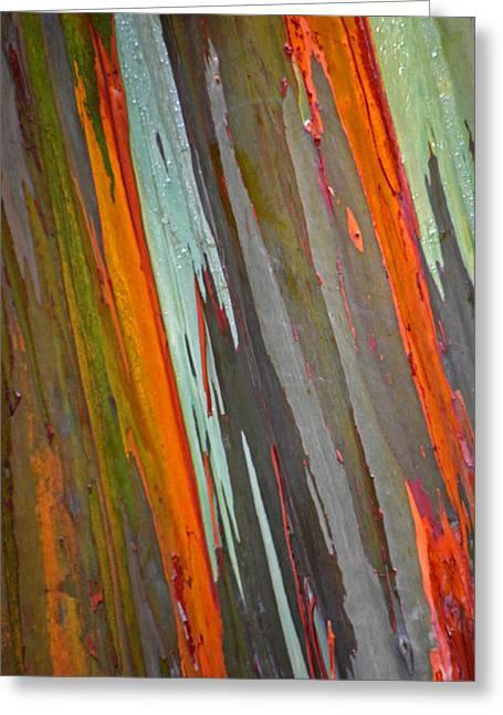 Colorful Trees Greeting Cards - Rainbow Eucalyptus Tree Greeting Card by Elizabeth Hoskinson