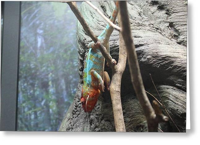 Tim Michael Greeting Cards - Rainbow Iguana   Greeting Card by Tim Michael Ufferman