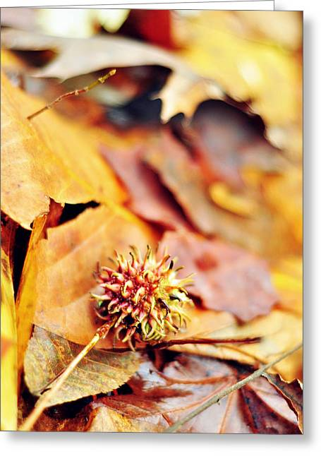 Seedpods Greeting Cards - Rainbow in a Sigh Greeting Card by Rebecca Sherman
