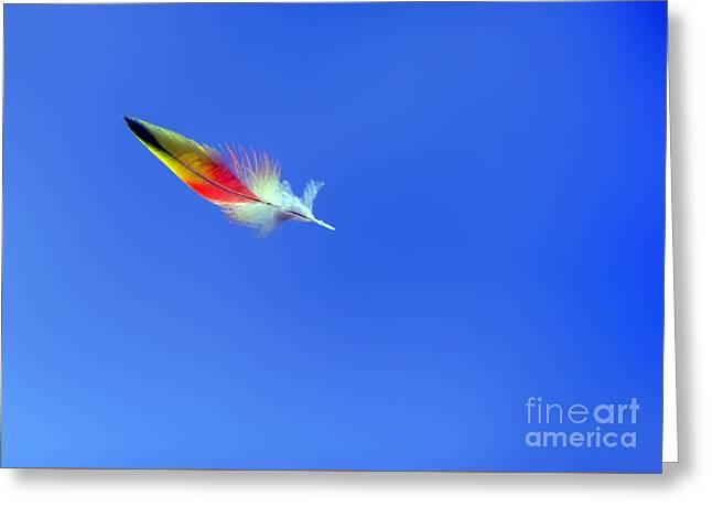 Rainbow Lorikeets Greeting Cards - Rainbow Lorikeet Feather Greeting Card by Bill  Robinson