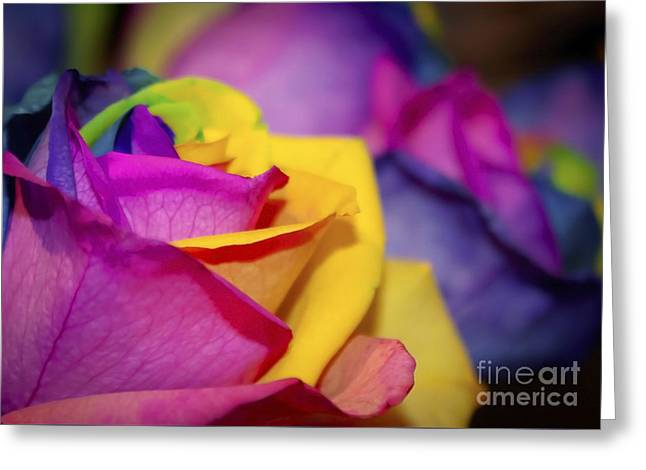 Special Occasion Greeting Cards - Rainbow Roses Greeting Card by Janice Rae Pariza