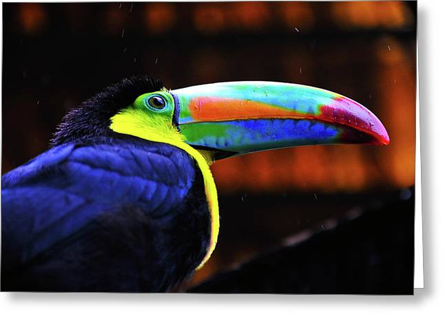 Toucan Print Greeting Cards - Rainbow Toucan Greeting Card by Harry Spitz