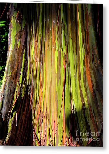 Rainbow Tree Greeting Card by Jon Burch Photography
