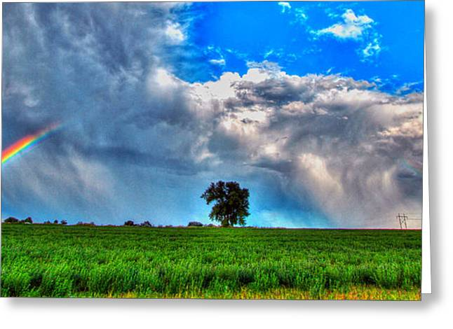 Fort Collins Photographs Greeting Cards - Rainbow Tree Greeting Card by Scott Mahon