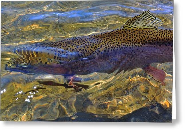 Rainbow Trout Greeting Cards - Rainbow Trout Greeting Card by Link Jackson