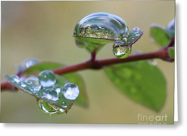 Raindrop Reflections Greeting Card by Jackie Tweddle