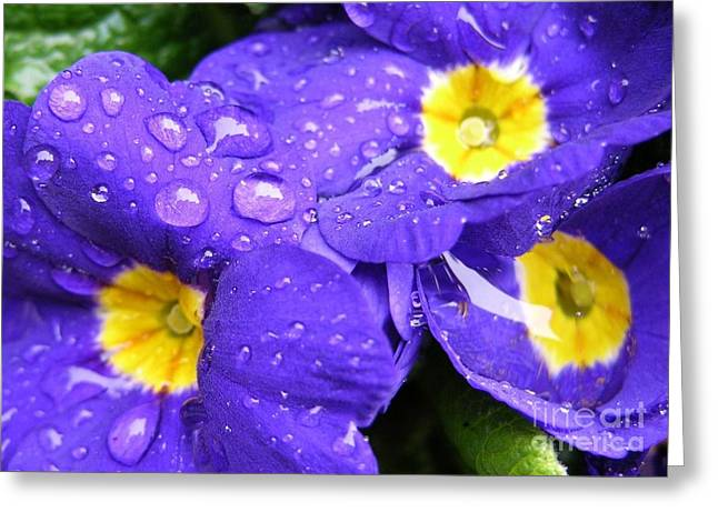 Raindrops On Flowers Greeting Cards - Raindrops on Blue Flowers Greeting Card by Carol Groenen