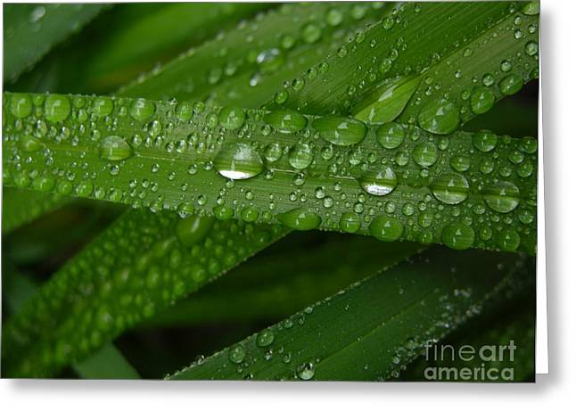 Raindrops on Green Leaves Greeting Card by Carol Groenen