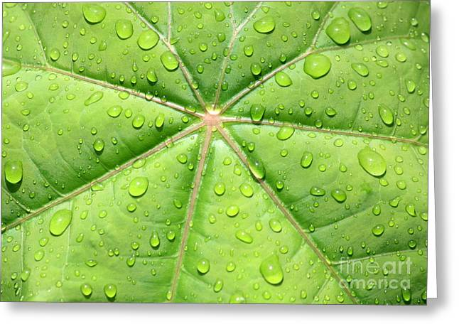 Raindrops On Leaves Greeting Cards - Raindrops on Leaf Greeting Card by Carol Groenen