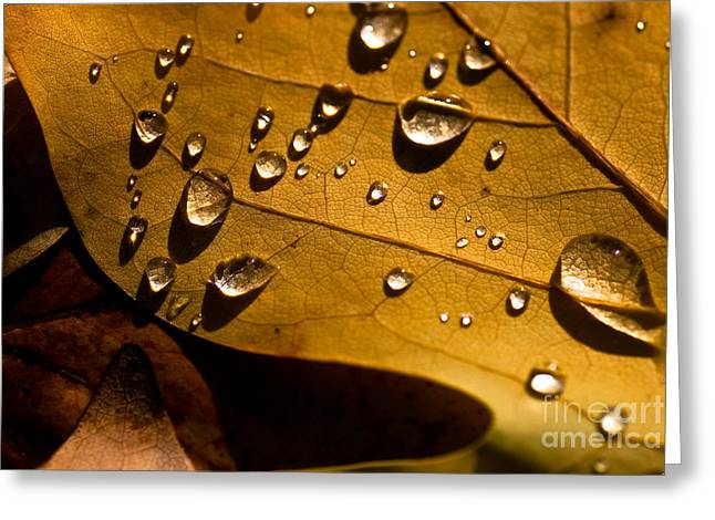 Van Dusen Botanical Garden Greeting Cards - Raindrops on Leaf Greeting Card by Venetta Archer