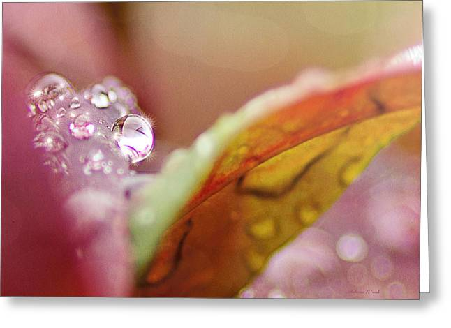 Raindrops On Nandina Greeting Card by Bellesouth Studio