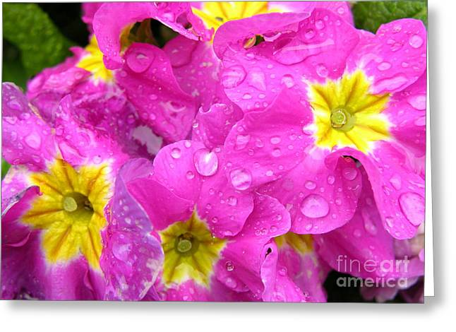 Raindrops On Flowers Greeting Cards - Raindrops on Pink Flowers 2 Greeting Card by Carol Groenen
