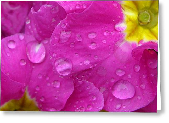 Raindrops on Pink Flowers Greeting Card by Carol Groenen