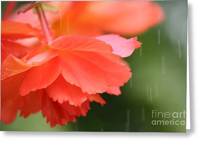 Raindrops On Flowers Greeting Cards - Raindrops on Roses Greeting Card by Julie Lueders