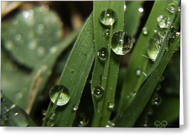 Wet Grass Greeting Cards - Raindrops on the Grass Greeting Card by Karen Musick
