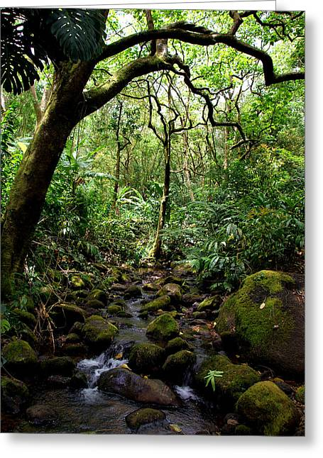 Kevin Smith Greeting Cards - Rainforest Stream Greeting Card by Kevin Smith