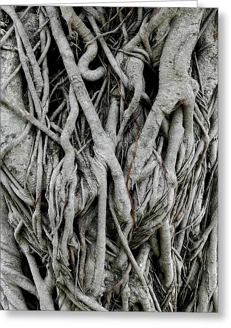 Tree Roots Greeting Cards - Rainforest Tangle Greeting Card by Sandra Sengstock-Miller