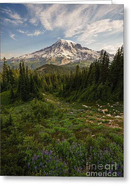 Paradise Meadow Greeting Cards - Rainier and Majestic Meadows of Wildflowers Greeting Card by Mike Reid