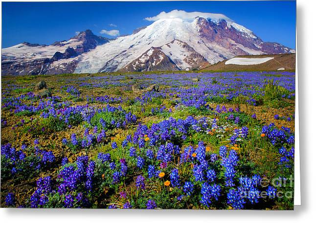 Pacific Greeting Cards - Rainier Lupines Greeting Card by Inge Johnsson