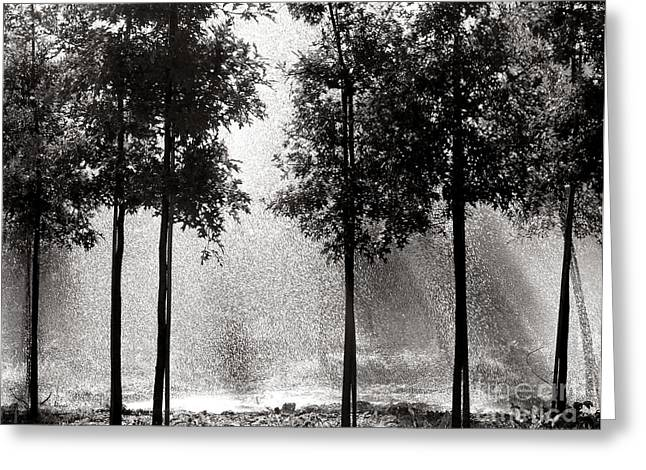 Rain Drop Greeting Cards - Rainshower Greeting Card by Olivier Le Queinec