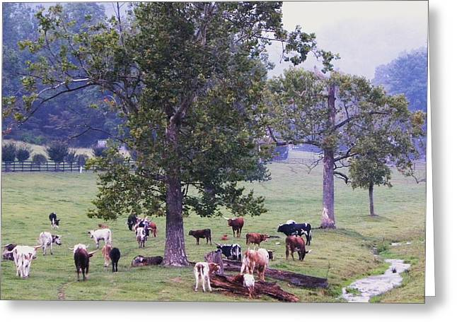Best Sellers -  - Pastureland Greeting Cards - Rainy Day Longhorns III Greeting Card by Cindy Gacha