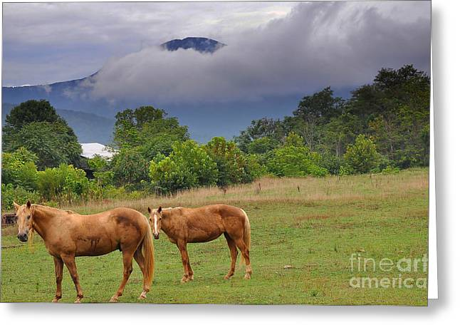 Horse Images Greeting Cards - Rainy Day Greeting Card by Todd Hostetter