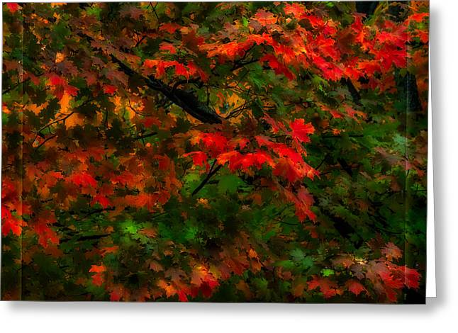 Oranger Greeting Cards - Rainy Fall Leaves Greeting Card by Steven Maxx
