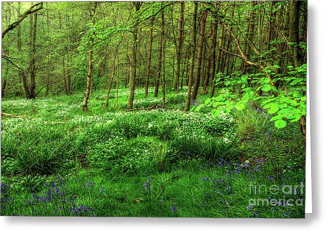 Backlit Greeting Cards - Ramsons and Bluebells Greeting Card by John Edwards