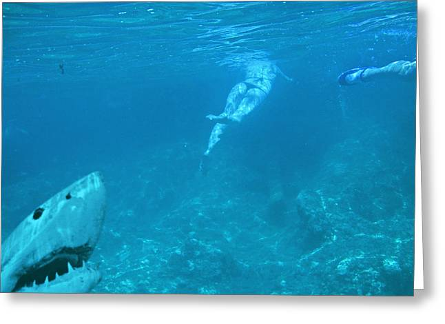 Mccoy Greeting Cards - Random photo. Underwater World. Greeting Card by Andy Za