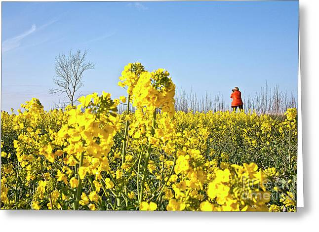 Creative People Greeting Cards - Rape field with photographer Greeting Card by Heiko Koehrer-Wagner