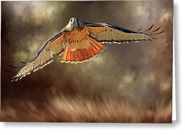Raptor Greeting Card by Donna Kennedy