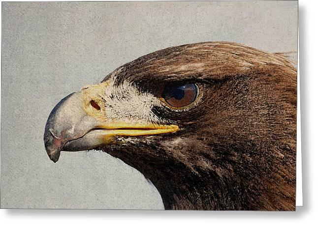 Raptor Wild Bird Of Prey Portrait Closeup Greeting Card by Design Turnpike