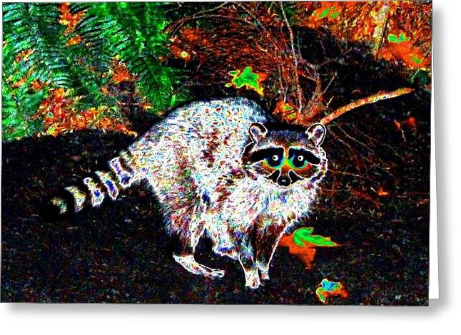 Cautious Greeting Cards - Rascally Raccoon Greeting Card by Will Borden