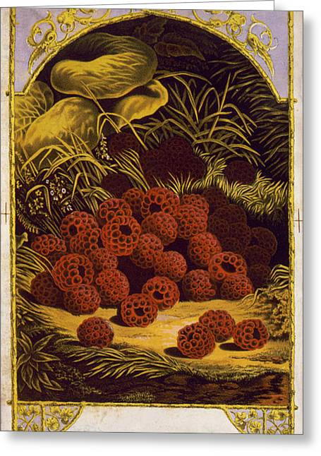 Raspberries Vintage Fruit Label Greeting Card by Vintage