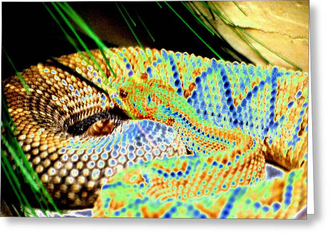 Rattle Snake Greeting Cards - Rattler Greeting Card by Peter  McIntosh