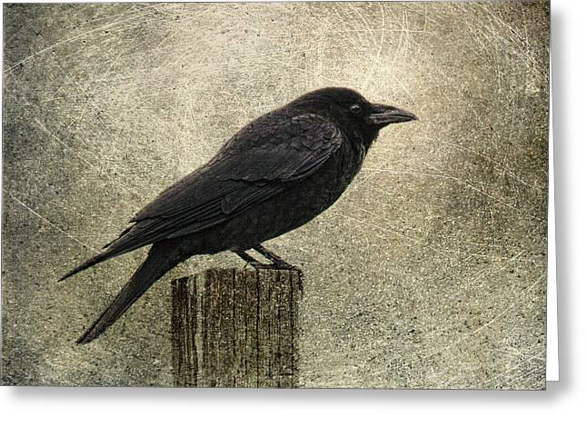 Biology Greeting Cards - Raven Greeting Card by Elena Nosyreva