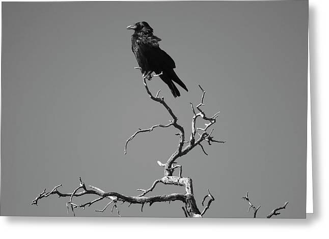 Corax Greeting Cards - Raven III Greeting Card by David Gordon