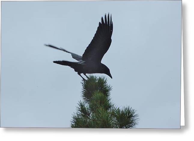 Black Top Greeting Cards - Raven Landing I Greeting Card by Linda Brody