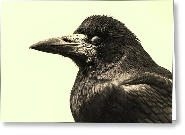 Raven Greeting Card by Martin Newman