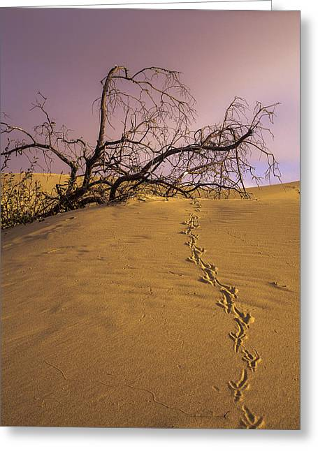 Oregon Dunes National Recreation Area Greeting Cards - Raven Tracks Greeting Card by Robert Potts
