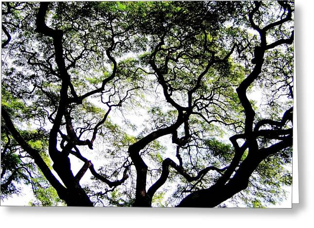 Reach For The Sky Greeting Card by Karen Wiles